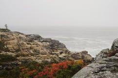 Felsige Küste des acadia-Nationalparks Stockbild