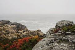 Felsige Küste des acadia-Nationalparks im Herbst Stockbilder