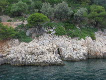 Felsige Küste nahe bei Meer mit Olivenbäumen Stockfotografie