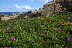 Felsige Küstenlinie in Sardinien, Italien Stockfotografie