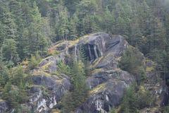 Felsige Klippe mit Kiefernwald stockbilder