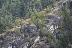 Felsige Klippe mit Kiefernwald lizenzfreie stockbilder