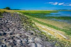 Felsige Seelandschaft mit Meerespflanze Lizenzfreie Stockbilder