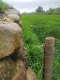 Felsige Wand mit grasartiger Landschaft lizenzfreie stockfotografie