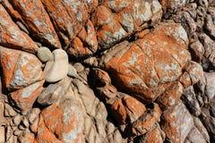 Felsiger herausgestellter Meeresboden - horisontal stockfoto