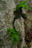 Felsiger Oberflächenkalkstein, grauer Kalkstein und Hintergrund in Thailand Stockfoto