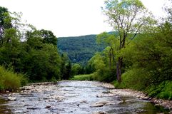 Felsiges Gebirgsflussflussbett auf bewaldeten Hügeln eines Hintergrundes Stockfoto