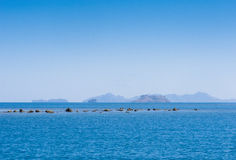 Felsiges Riff bei Ebbe aufgedeckt Stockfotos
