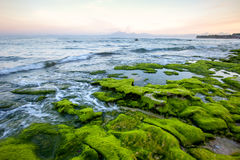Felsiges Ufer am frühen Morgen bedeckt mit Grünalgen mit Bergblicken Lizenzfreie Stockfotos