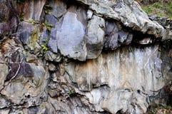 Felszeichnung in Valcamonica - Kiefern 1 des Kapitals 2 Stockfotos