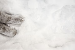 Felt boots in snow. Royalty Free Stock Images