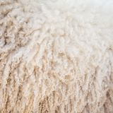 Felt sheep wool background Royalty Free Stock Photos