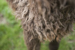 Felted horse hair royalty free stock photo