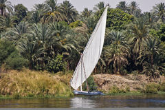 Felucca on the Nile. A felucca sails on the Nile in Egypt Royalty Free Stock Photo