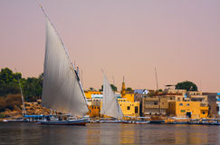 Felucca on the Nile in Egypt. Felucca on the Nile at Aswan in Egypt Stock Photography
