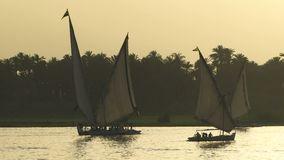 Felucca sailing boats on the nile. Felucca sailing boats in the evening on the Nile river stock footage