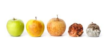 Fem äpplen i olika tillstånd av förfall Arkivfoto