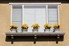 fem blommakrukar Arkivbild