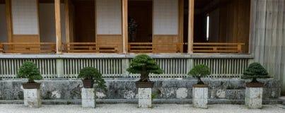 Fem bonsaiträd i en linje Royaltyfri Foto