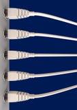 Fem Ethernetkablar pluggade in i en stickkontakt Royaltyfri Fotografi