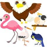 Fem färgrika gulliga fåglar Arkivfoto