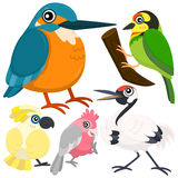 Fem färgrika gulliga fåglar Arkivbilder