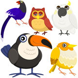 Fem färgrika gulliga fåglar Arkivbild