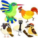 Fem färgrika gulliga fåglar Royaltyfri Fotografi