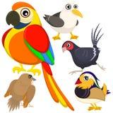 Fem färgrika gulliga fåglar Fotografering för Bildbyråer