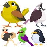 Fem färgrika gulliga fåglar Royaltyfri Bild