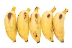 Fem gula bananer Fotografering för Bildbyråer