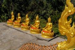 Fem guld- Buddha med olika mudras i rad Arkivfoto