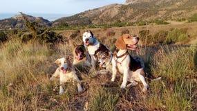 Fem hundkapplöpning ligger i gräset i bergen nära fortresssna royaltyfri bild