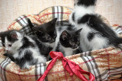 Fem kattungar tillsammans Royaltyfri Bild