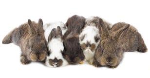 Fem lilla kaniner arkivbilder