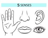 Fem mänskliga avkänningar stock illustrationer