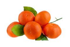 Fem mandariner på en filial med gröna sidor på en vit bakgrund isolerad closeup royaltyfri foto
