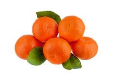 Fem mandariner på en filial med gröna sidor på en vit bakgrund isolerad closeup fotografering för bildbyråer