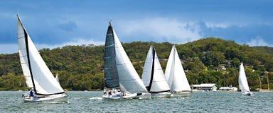 Fem monohullseglingyachter som springer på Brisbane vatten Arkivfoton