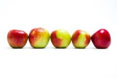 Fem nya äpplen i rad Fotografering för Bildbyråer