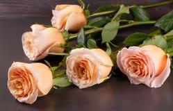 Fem nya beigea rosor på en mörk träbakgrund Royaltyfri Foto