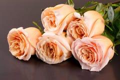 Fem nya beigea rosor på en mörk träbakgrund Fotografering för Bildbyråer