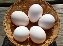 Fem nya fega ägg i en vide- korg Royaltyfri Fotografi