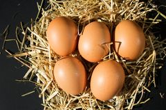 Fem nya rå ägg med fräknar på höet på svart bakgrund royaltyfria bilder