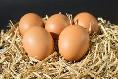 Fem nya rå ägg med fräknar på höet på svart bakgrund arkivbilder