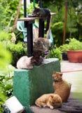 Fem olika katter sover p? farstubron av en koja royaltyfri bild