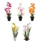 Fem orchids på krukar Arkivfoto