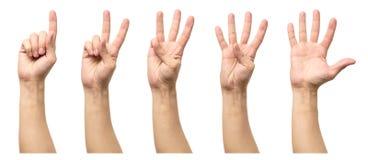 Fem räknande manhänder som isoleras på vit Royaltyfri Bild