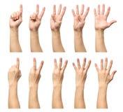 Fem räknande manhänder som isoleras på vit Arkivbilder