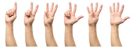 Fem räknande manhänder som isoleras på vit Fotografering för Bildbyråer